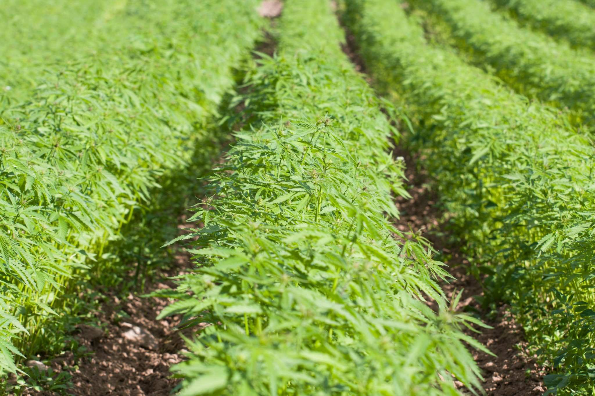 Hemp Farming With Unyte Hemp